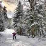 Woman cross country skiing on snowy path between trees